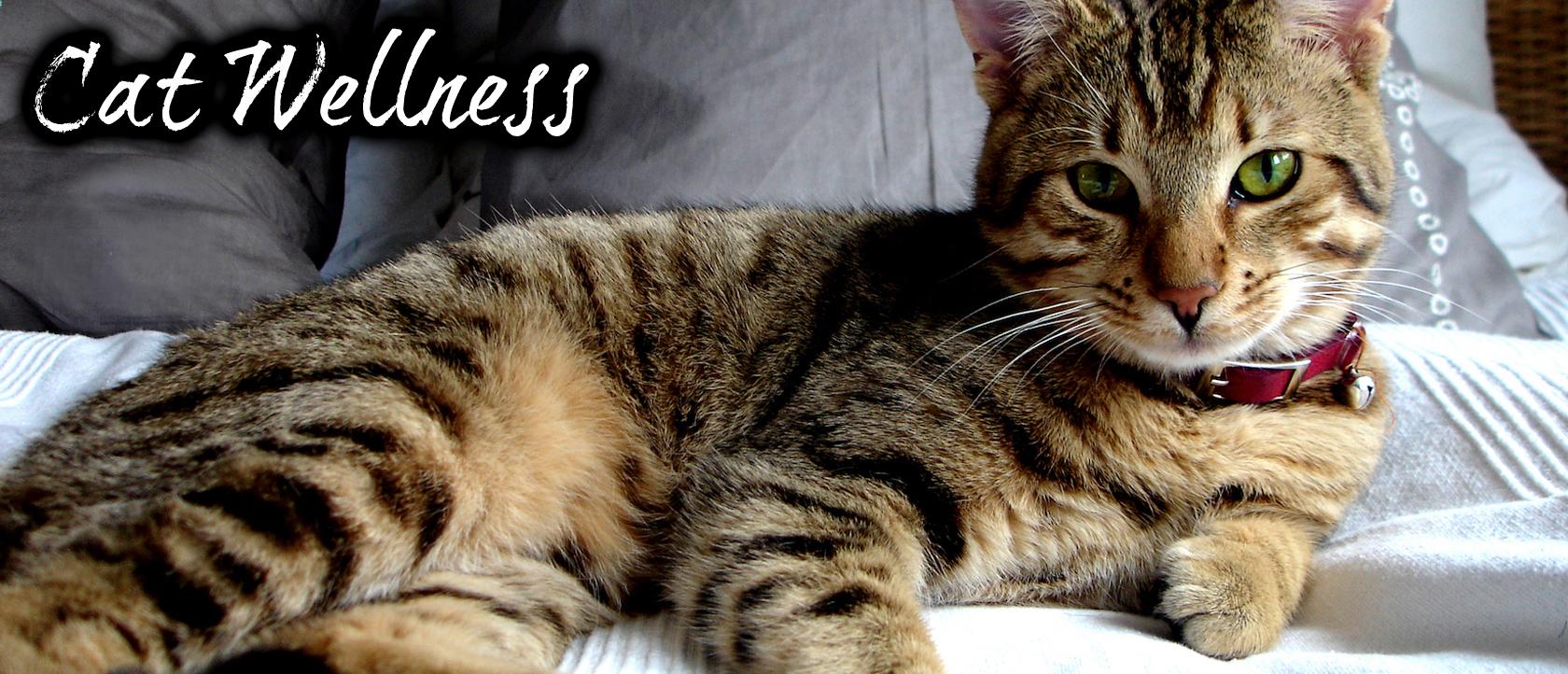 CatWellness